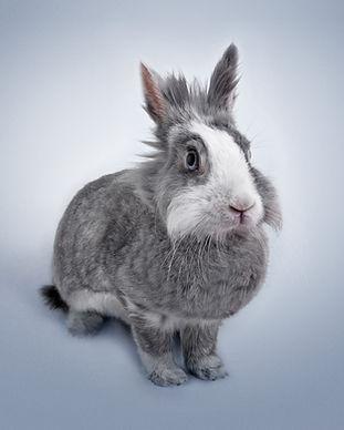 Grappig konijn