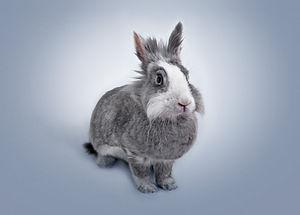 Coelhinho engraçado