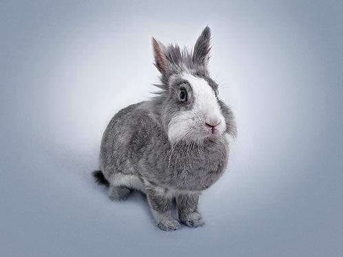 Rabbit Level 2 Proficiency Test