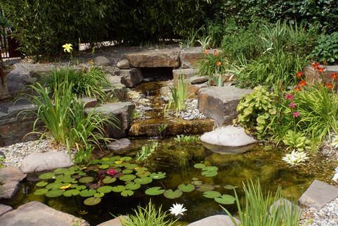 Gartenteich Flora & Fauna Landschaftsarchitektur