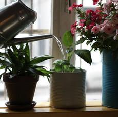 Watering Michelle's plants