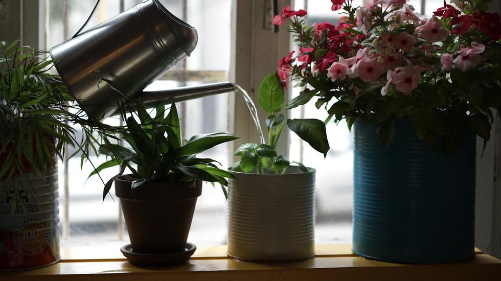 Livraisons fleurs Genève