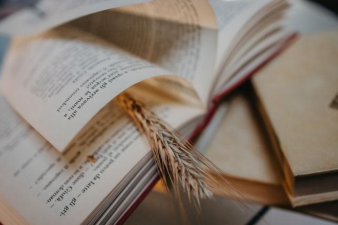 Lendo livros