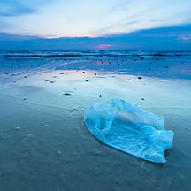 Plastic Bag on Beach