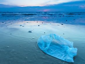 Le Manta : un catamaran nettoyeur des mers, mais pas que !