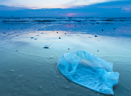 No to the plastic bag: What are the alternatives?