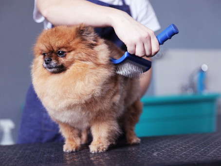 Brushing Your Pets