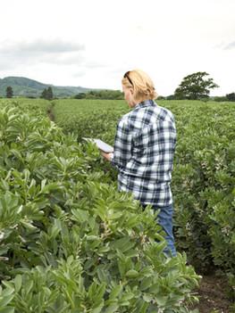 GMO (Genetically Modified Organism)