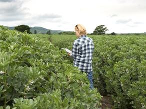 Blockchain en la agroindustria