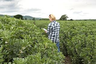 Comprobando los cultivos