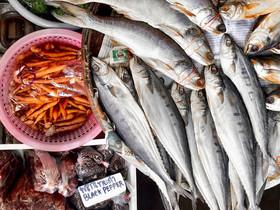 魚類在養殖場的苦日子