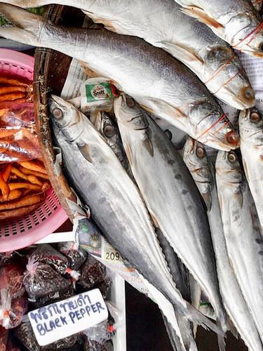 FISH MANAGEMENT - DR CONGO