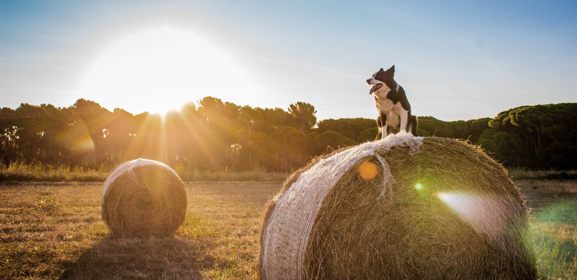 Chien à la ferme