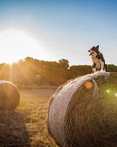 Veterinary Nutrition Consultation
