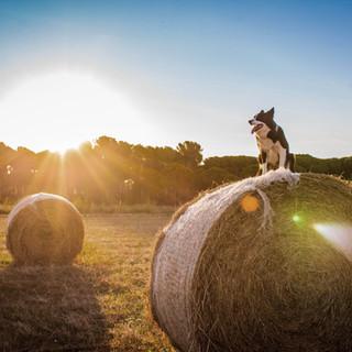 Cão na fazenda