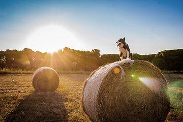 Pes na farmě