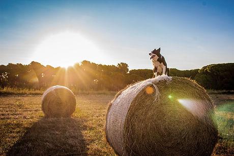 Cane in fattoria