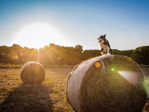 Livestock and dog owner responsibilities