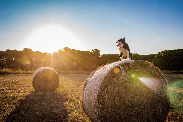 Walkabout Coaching Natur Coaching Datenschutz Hund im Bauernhof