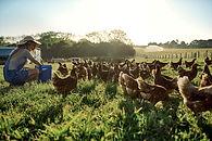 Tavuk sürüsü ile genç çiftçi