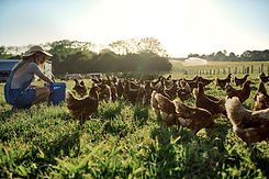 Joven agricultor con bandada de pollos