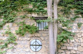 石の壁に登る植物