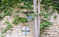 Climbing Plants on Stone Wall