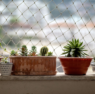 Non-Toxic Plants for Households with Kids and Pets