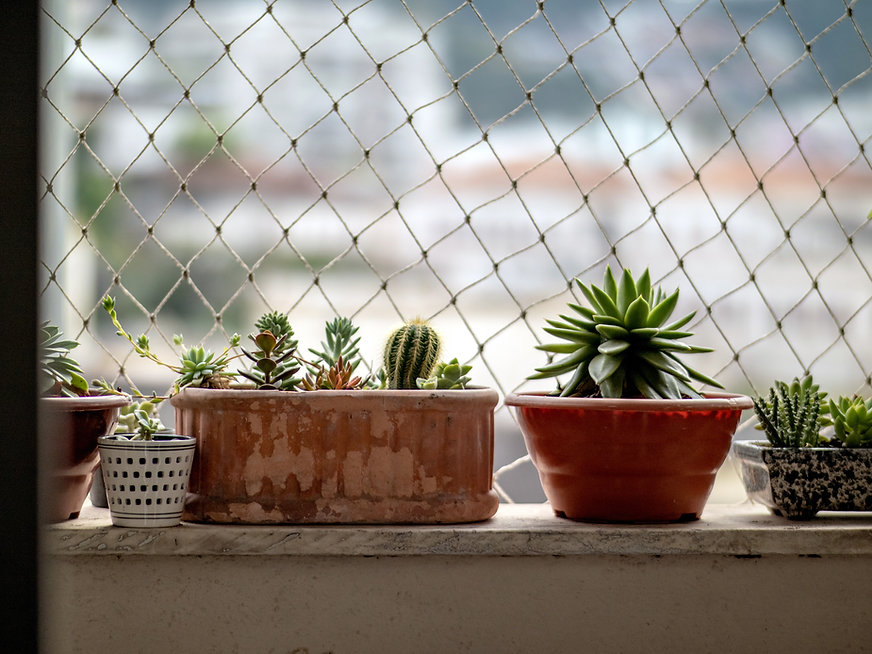 Plantas na janela