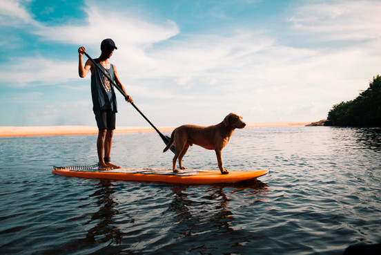 Homem com cachorro