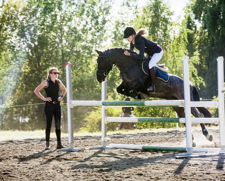 Horses and real estate agent near ocala fl