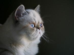 Pourquoi votre chat devient « malpropre »?