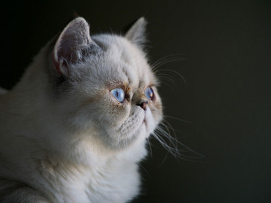 Could My Cat Have Asthma?