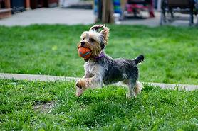 Playful Dog