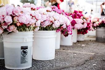 新鮮な花々