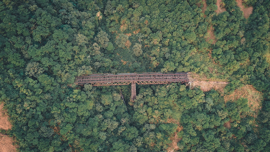 Train in the Forest