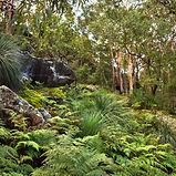 Myall Coast Tours rainforest eco walk experience