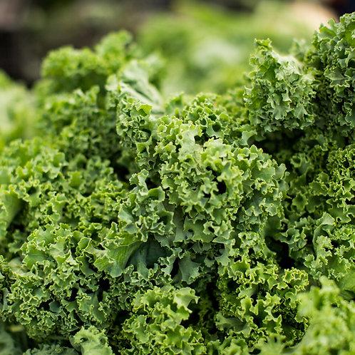 Kale, bunch