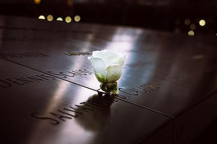 Memorial White Rose