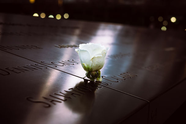 Weiße Gedenkrose