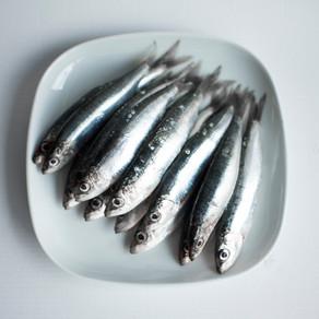 Sardine Secrets
