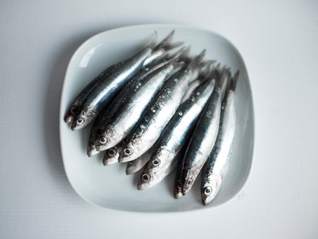 What Is Fish Oil & Why Do We Need It?