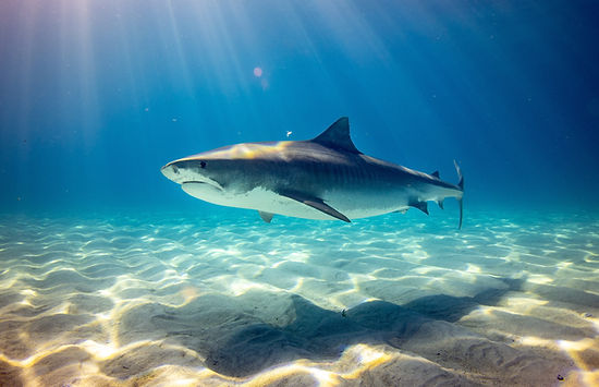 Can magnets repel sharks from fishing nets?