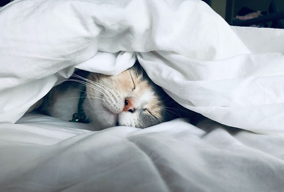 Gato adorable