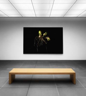 Affichage d'art