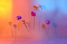 Fleurs flottantes