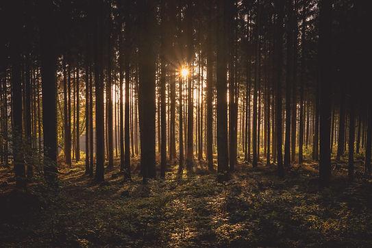Coucher de soleil dans la forêt