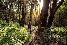 Vandring i skogen