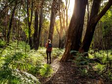 户外爱好者又添新去处,温岛将新建25公里长步道