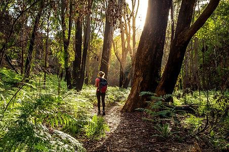 森でのハイキング